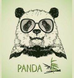hand drawn portrait of panda bear with glasses vector image