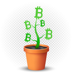 bitcoin plant grows in flowerpot vector image