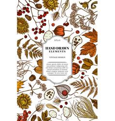 card design with colored rowan rowan acorn vector image