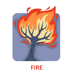 Fire natural disaster wildfire tree in flame vector