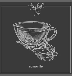 herbal tea with tender camomile in glass cup vector image