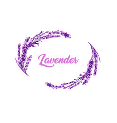 watercolor or aquarelle paintings of lavender vector image