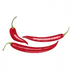 chili peppers vector image vector image