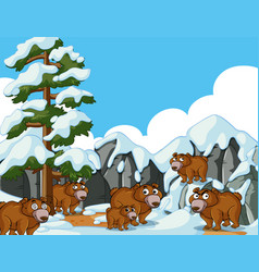 brown bears in snow mountain vector image