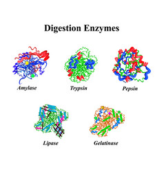 Digestion enzymes set chemical molecular formula vector