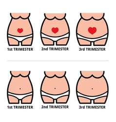 pregnancy stages icons pregnant belly design vector image