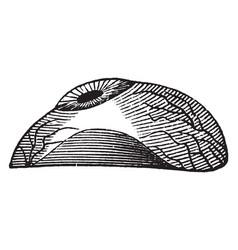Artificial eye vintage vector