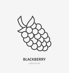 blackberry flat line icon forest berry sign vector image