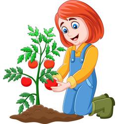 cartoon girl harvesting tomatoes vector image