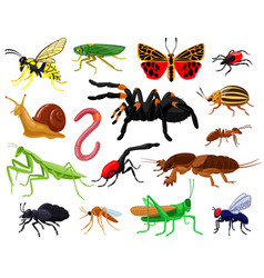 cartoon insects wood and garden cute insects vector image