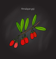 Goji berry branch vector