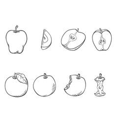 set sketch apple vector image