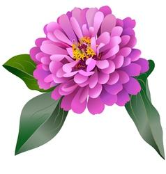 Realistic pink zinnia flower vector