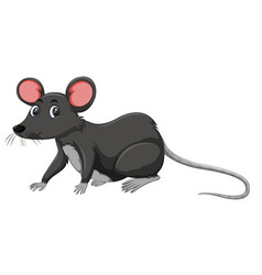 A black rat on white background vector
