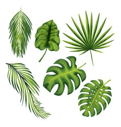 Exotic jungle plant leaves set vector