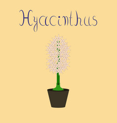 Flat on stylish background hyacinthus vector