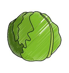 Lettuce fresh vegetable vector