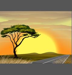 Savanna scene at sunset vector