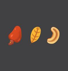 set cashew nut in cartoon vector image