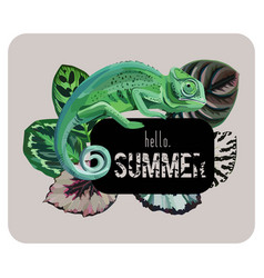 Slogan hello summer with chameleon vector