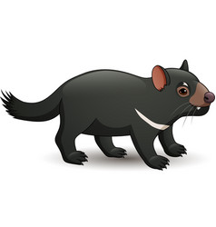 tasmanian devil isolated on white vector image