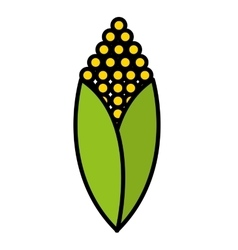 fesh vegetable corn isolated icon design vector image