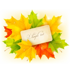 card with autumn colorful leaves vector image