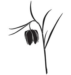 Fritillaria meleagris vector