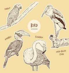 Set of hand drawn sketch style exotic birds vector