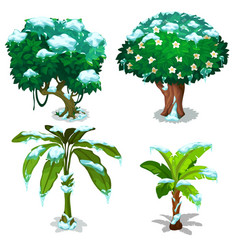 tropical trees and plants frozen under snow vector image