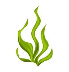 Aquarium green algae icon cartoon style vector