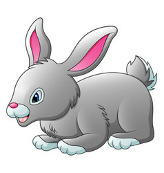 cute rabbit cartoon isolated on white background vector image