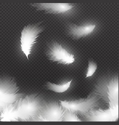 falling white fluffy feathers on air isolated on vector image