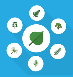 Flat icon natural set of acacia leaf tree spruce vector