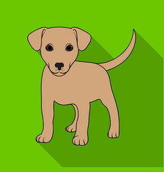 puppy labradoranimals single icon in flat style vector image
