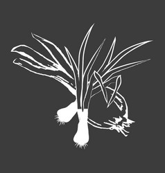 leek bunches and bulb onion isolated white outline vector image