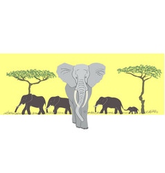 herd of elephants vector image vector image