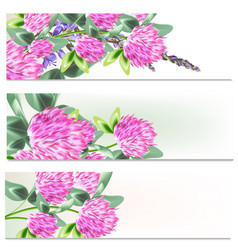 floral brochures set with flowers vector image
