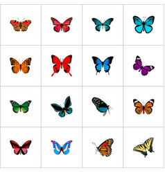 Set butterfly realistic symbols with tailed vector