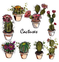 Set of hand drawn cactuses for design vector