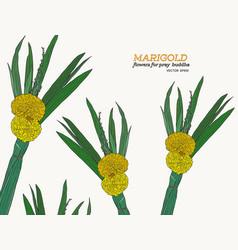 set of marrigold flower sketch vector image