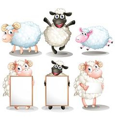 Sheeps and lambs with empty boards vector image vector image