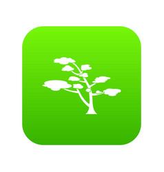 cedar icon digital green vector image