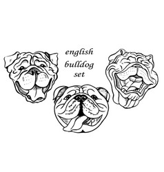 English bulldog set vector