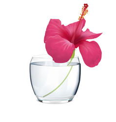 Flowers of pink hibiscus in vase vector
