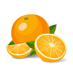 fresh oranges with green leaves vector image