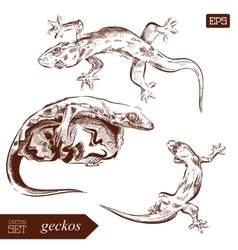 Geckos lizard Hand drawn Can vector image vector image