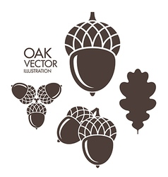 Oak Acorn Leaf vector