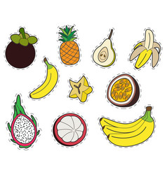 Set of exotic fruits stickers collection of vector
