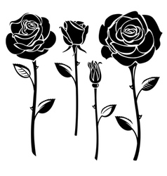 Black and white roses vector image vector image